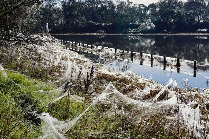İnanılmaz Örümcekler
