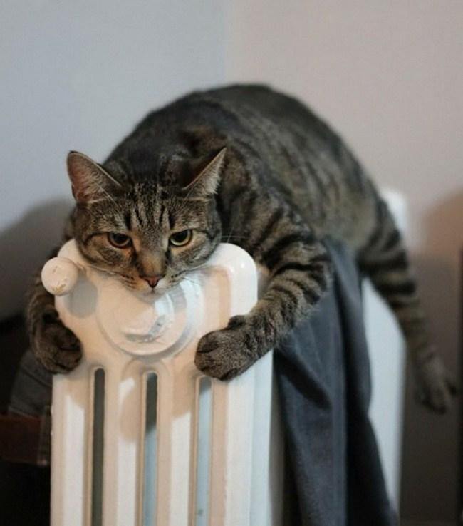 Kalorifer peteğine sarılan kedi