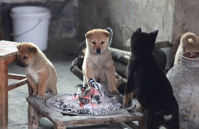 ateşte ısınan yavru köpekler