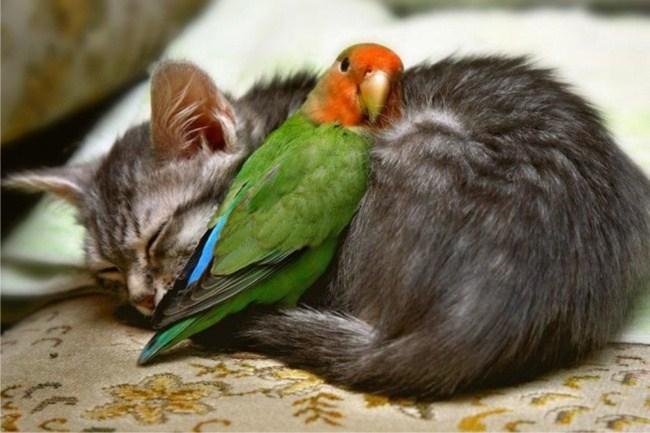 birbirini ısıtan kedi ve papağan