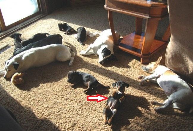 güneşte ısınan köpekler