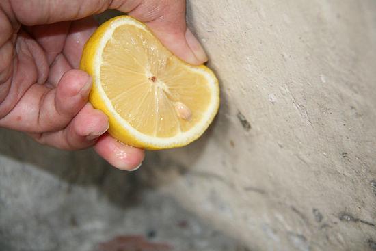 limon suyu karıncaları uzak tutar