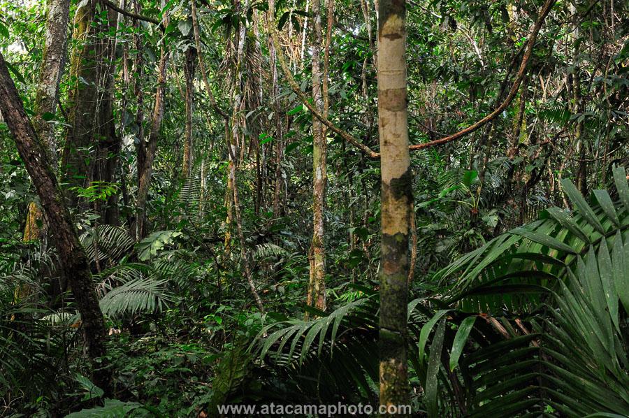 Madidi Ulusal Parkı - Bolivya