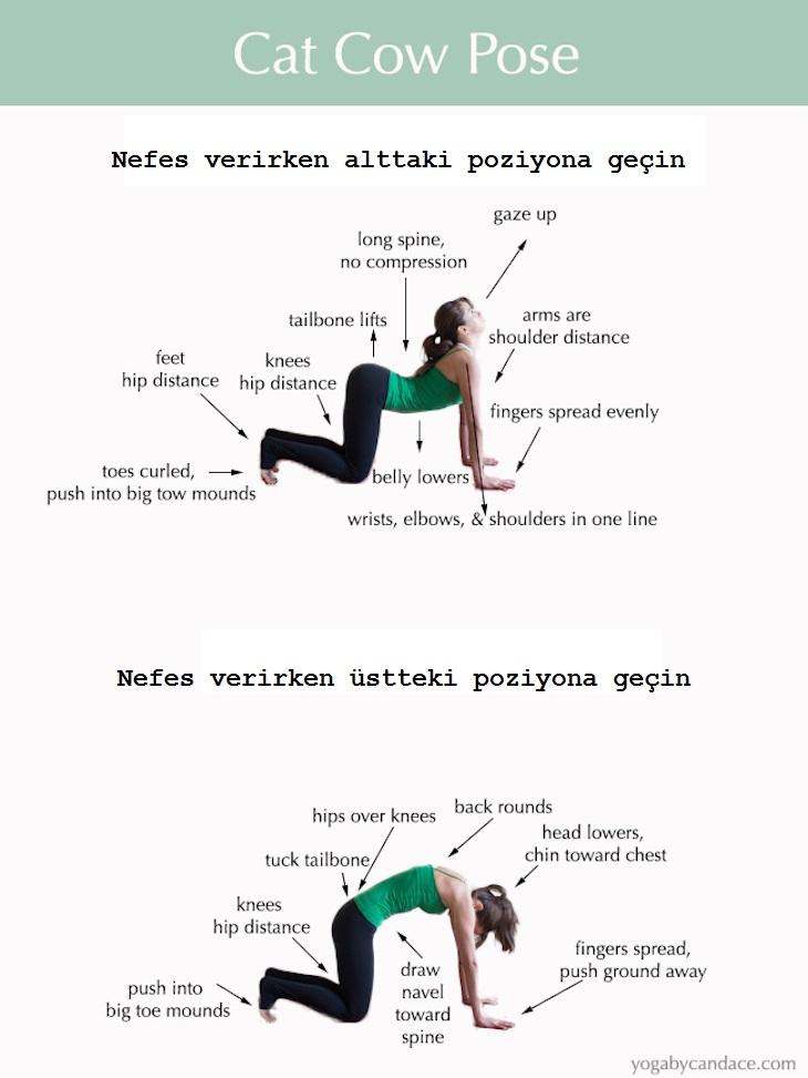 Yoga Kedi-Köpek Pozisyonu