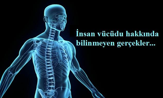 insan vücudu hakkında ilginç gerçekler