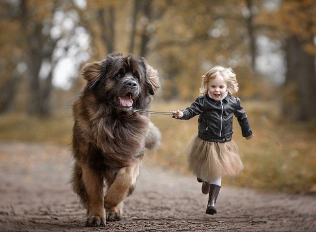 köpekler çocuklar kadar akıllı olabilir