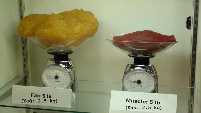 yağ ve kas arasındaki fark