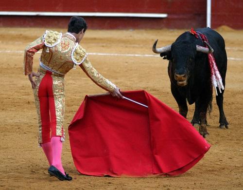 Boğa ve Matador