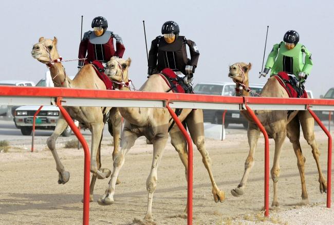 Dubai deve yarışları