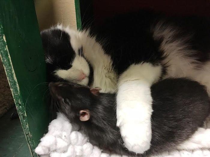 kedi ile fare