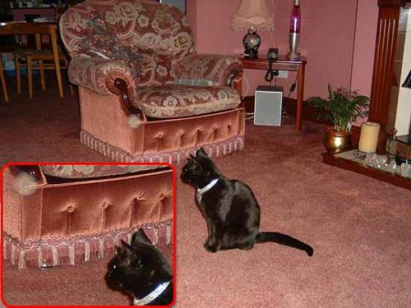 kediler doğa üstü varlıkları görebiliyor mu