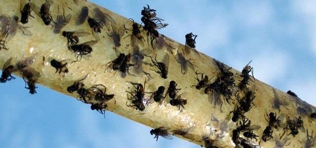 sinekleri uzak tutmak
