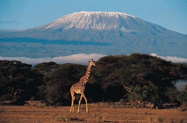 Kilimanjaro Dağı - Tanzanya