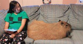 evde beslenen ilginç hayvan türleri