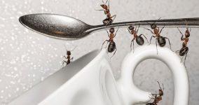 evdeki karıncalardan kurtulmanın yolları