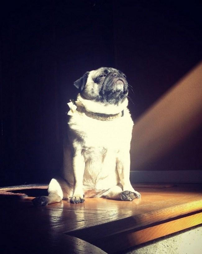 Güneş ışığını depolamaya çalışan köpek