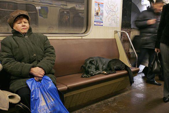 Moskova sokak köpekleri