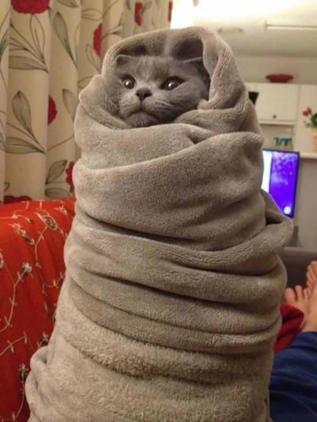 battaniyede ısınan kedi