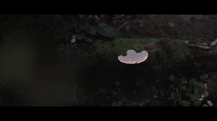 Biyolüminesan Orman