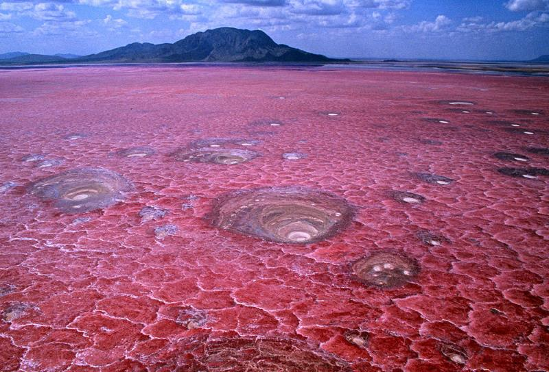 Natron Gölü - Tanzanya