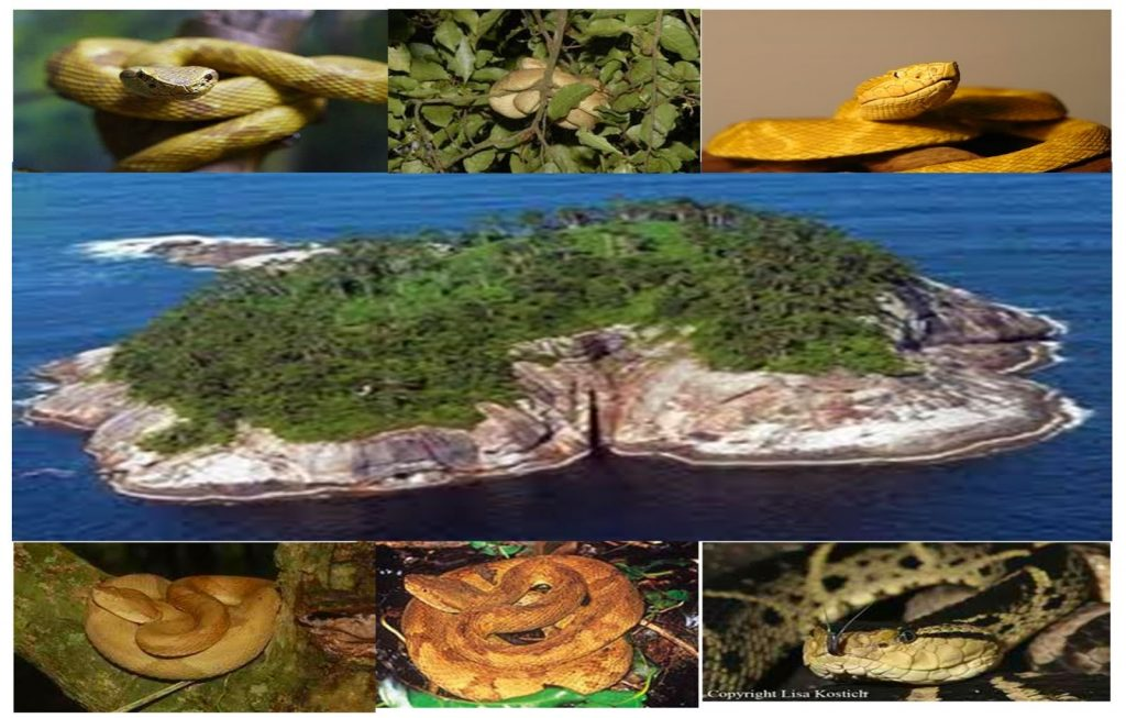 Yılan adası (lha da Queimada Grande)