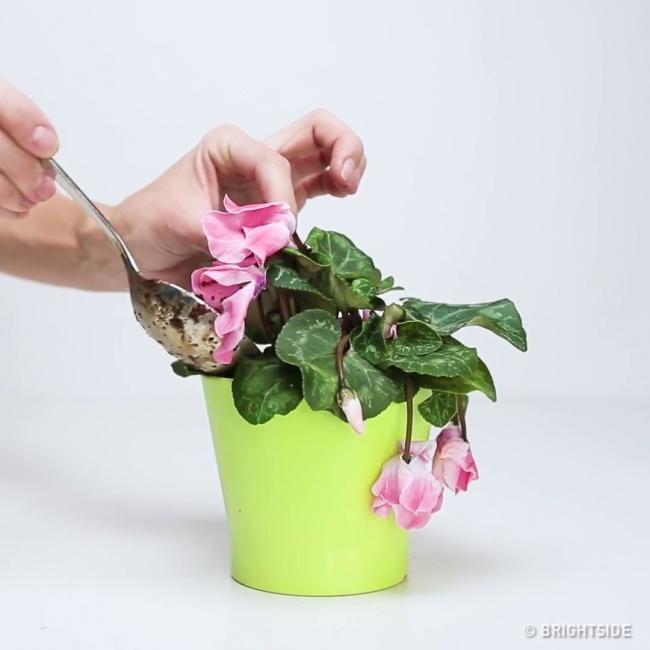 Çiçek Toprağı