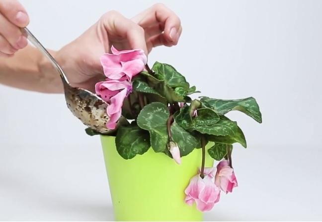 ölen çiçeği canlandırmak