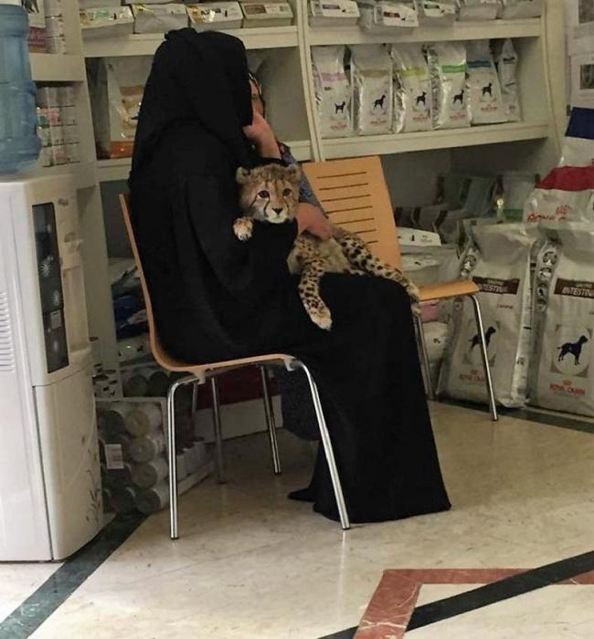 Dubai evcil yırtıcı kediler