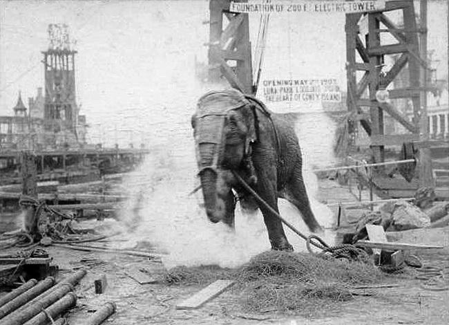 Edison'ın fili