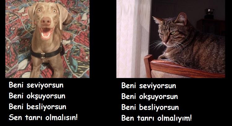 kediler ve köpeklerin farkları