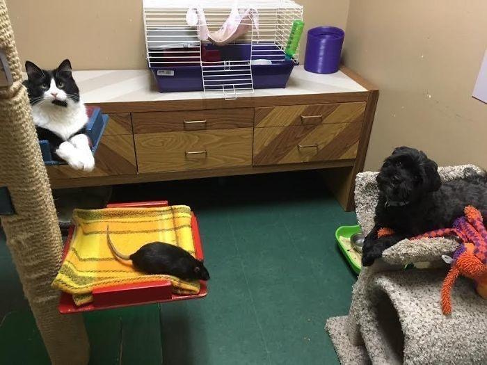 Kedi Köpek ve Fare