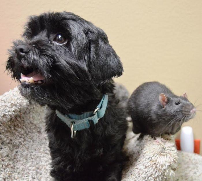 köpek fare dostluğu