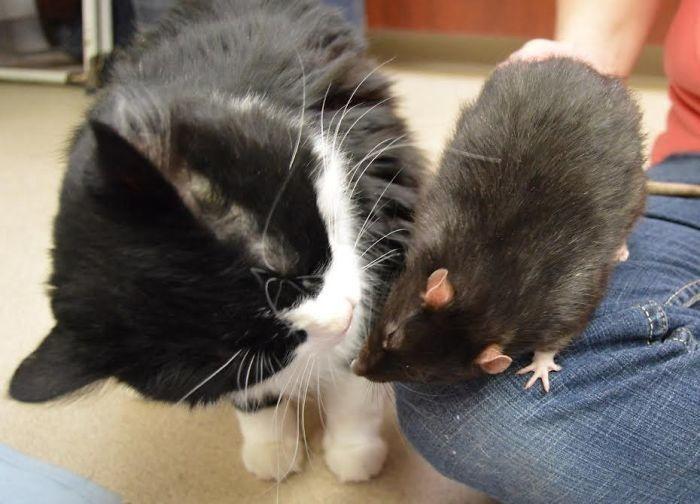 kedi fare dostluğu