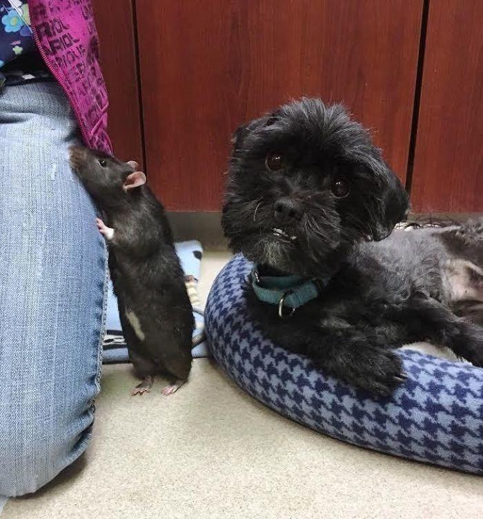 kedi köpek ve fare dostluğu