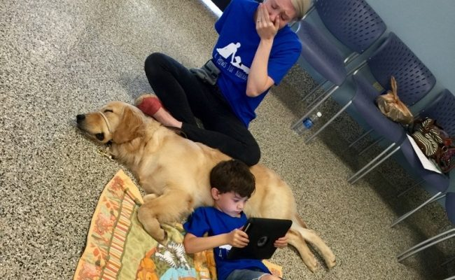 Otizm tedavisinde köpeklerin faydası