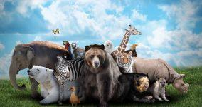hayvanlar hakkında ilginç gerçekler