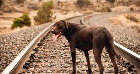 intihar eden hayvan türleri